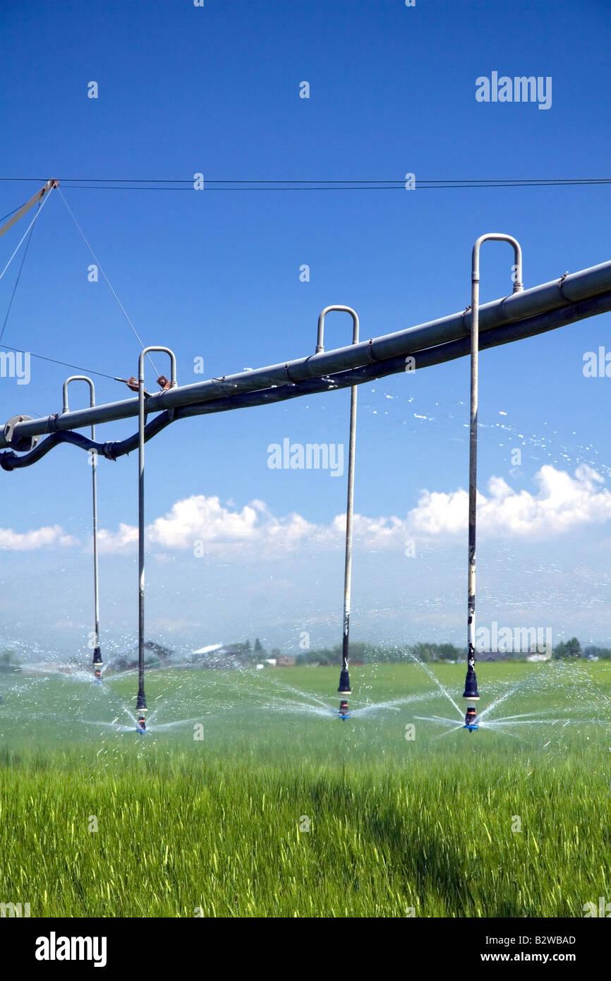 Pivot irrigation of a green wheat field near St Anthony Idaho - Stock Image