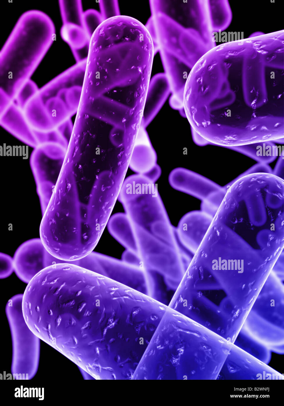 3d bacteria - Stock Image
