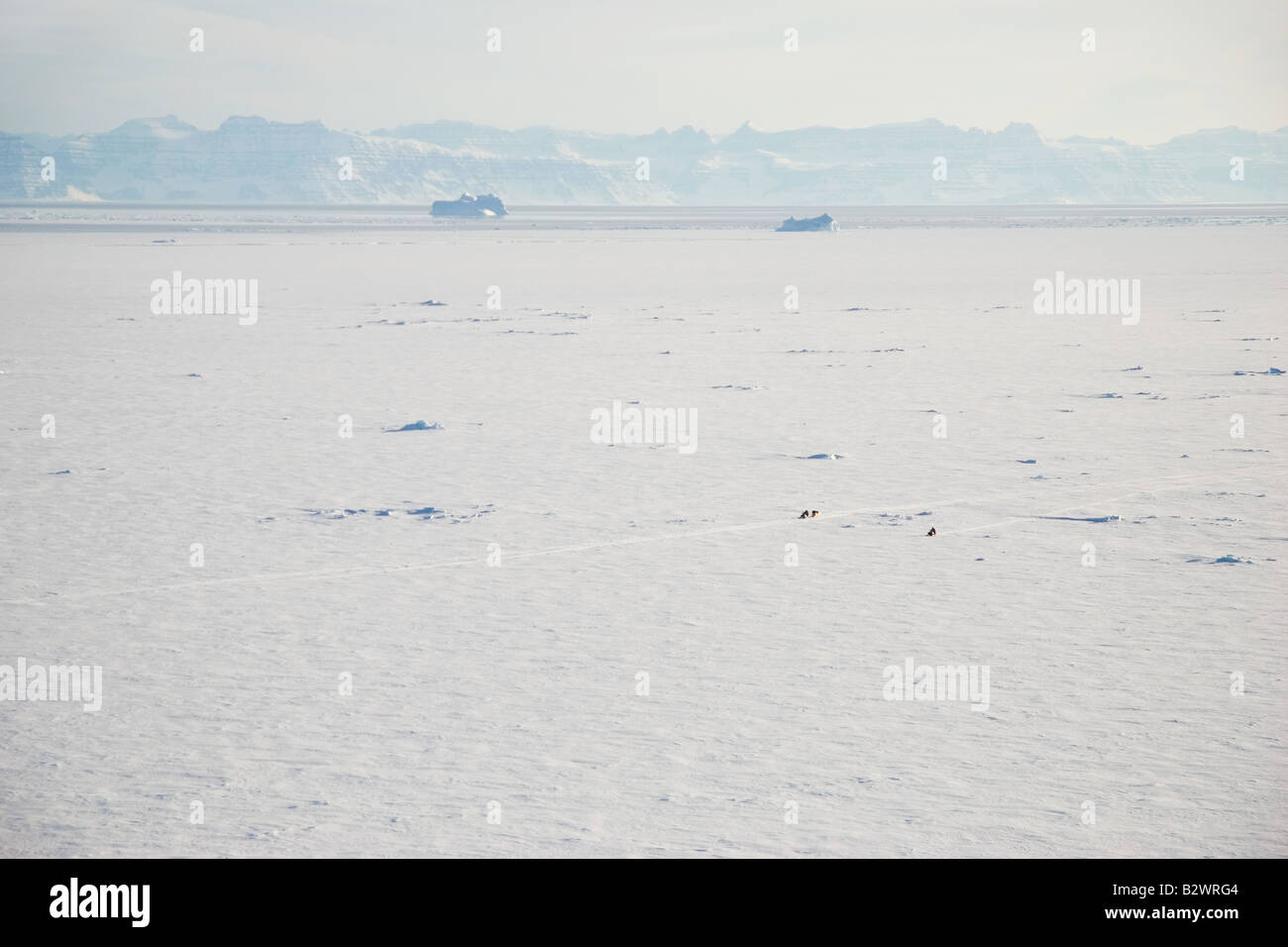 Snowmobiles being driven across the frozen sea ice of Scoresbysund fjord on the outskirts of Ittoqqortoormiit, East - Stock Image