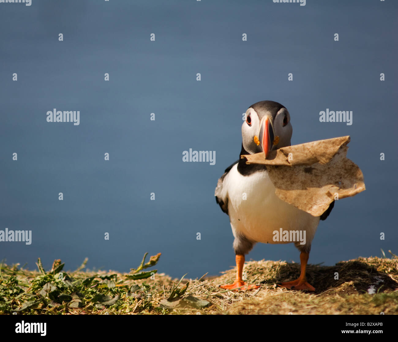 puffing proud of his rubbish - Stock Image