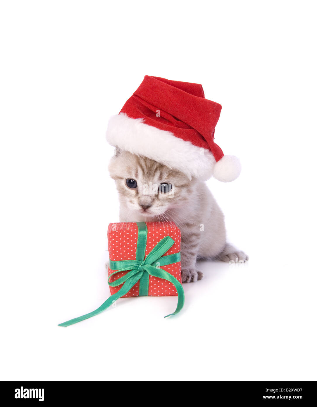 cute christmas kitten wearing santa hat with christmas gift isolated