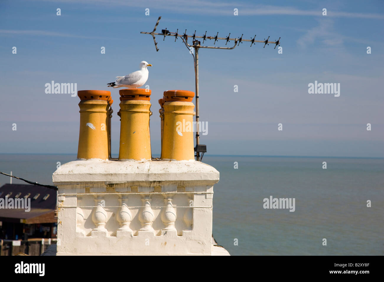 Herring Gull perched on chimney pots - Stock Image