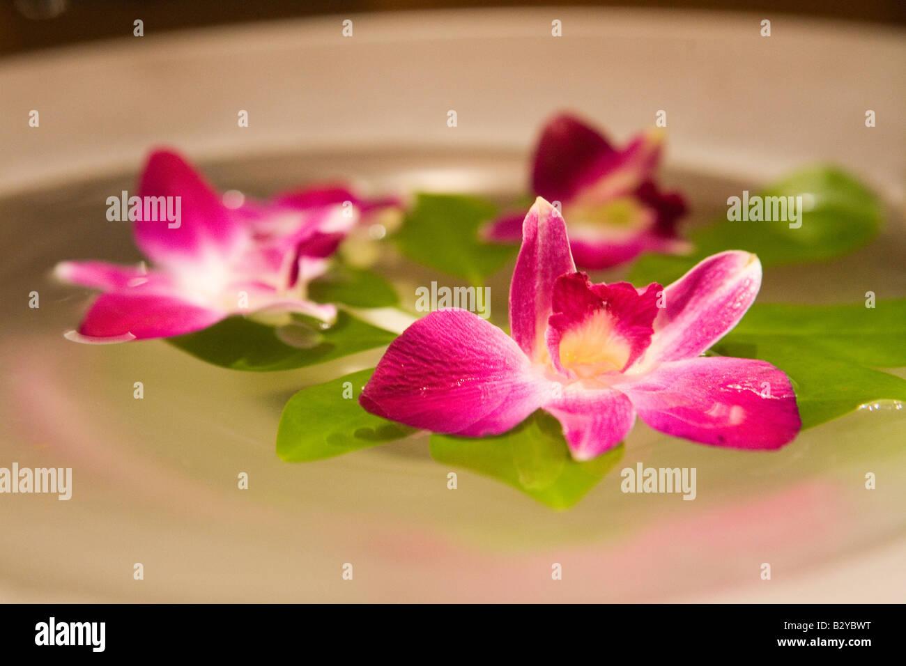 Lotus Flower Sacred Flower Of Hinduism Stock Photo 19041732 Alamy