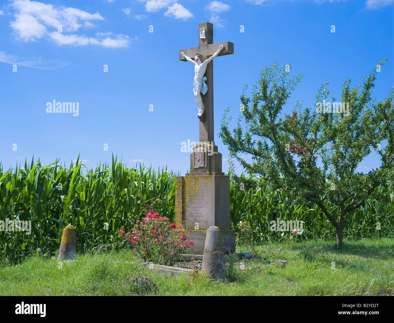 ROADSIDE FLOWERED CROSS AND CORN FIELD ALSACE FRANCE - Stock Image
