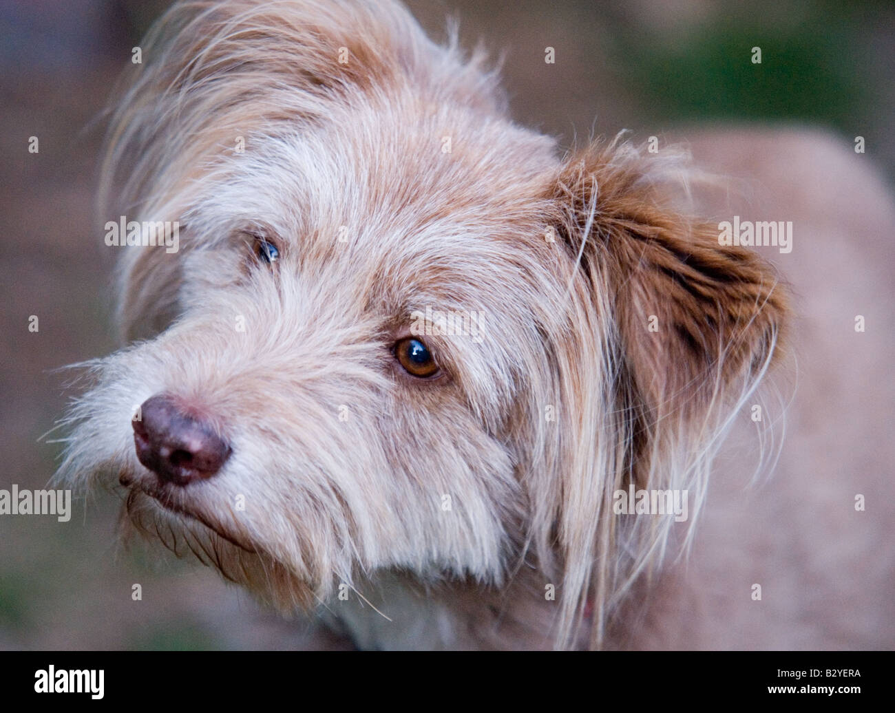 Simple Fluffy Canine Adorable Dog - cute-dog-B2YERA  Picture_55555  .jpg