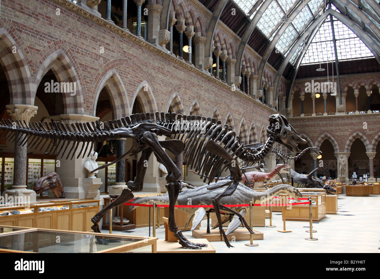 Dinosaur skeletons in Oxford's Natural history museum. - Stock Image