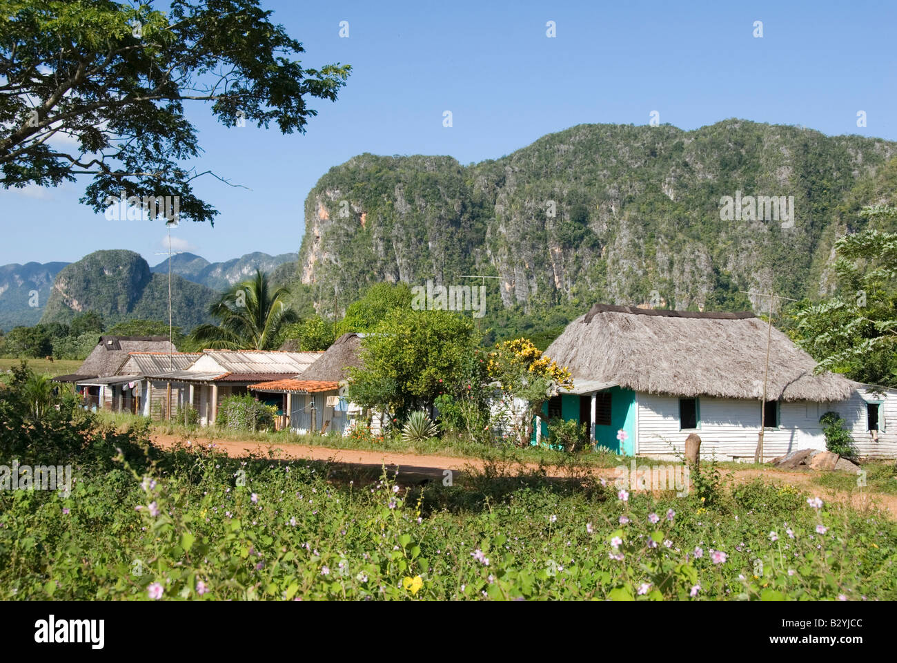 Traditional thatched wooden houses with steep limestone mogotes in the distance in the Viñales valley Cuba - Stock Image