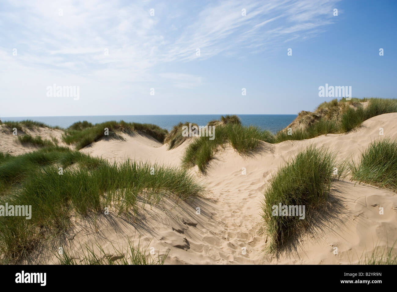 Marram Grass, Ammophilia arenaria, on mobile sand dunes. Formby. - Stock Image