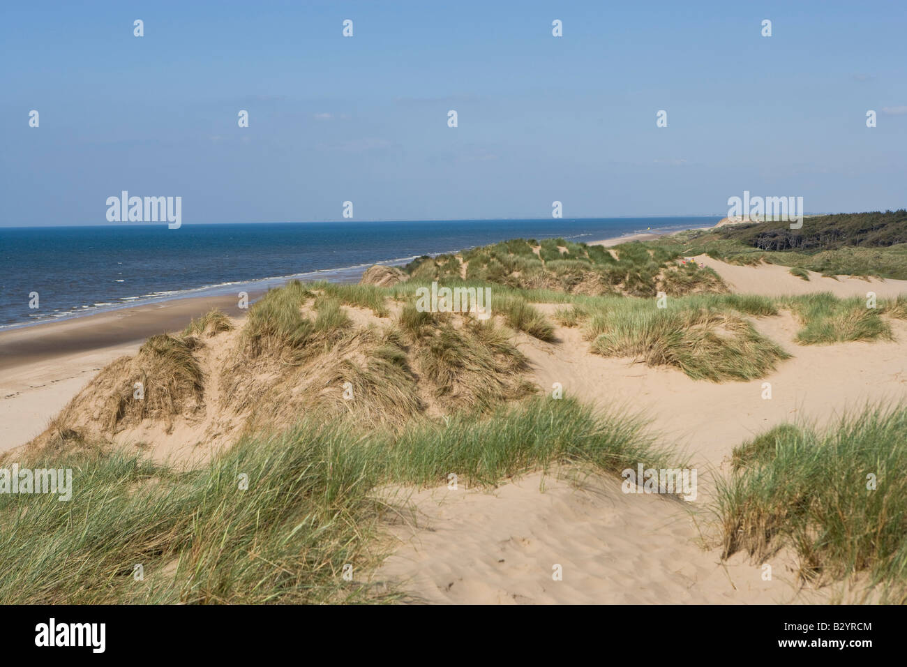 Formby sand dunes with Ammophilia arenaria, Marram Grass - Stock Image