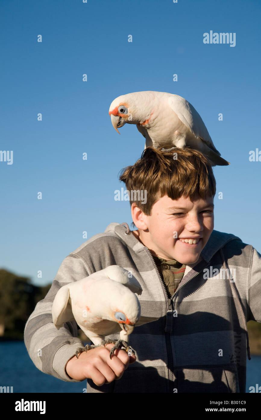 Ten Year old boy feeding Corellas Centennial Parkland Sydney New South Wales Australia Stock Photo