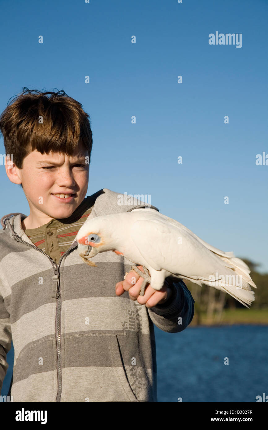 Ten Year old boy feeding a Corella Centennial Parkland Sydney New South Wales Australia Stock Photo