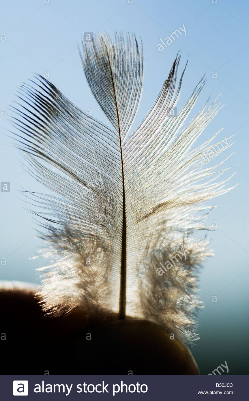 Backlit with sunlight of a magical feather held tightly between two fingers. It almost look like a little angel. - Stock Image