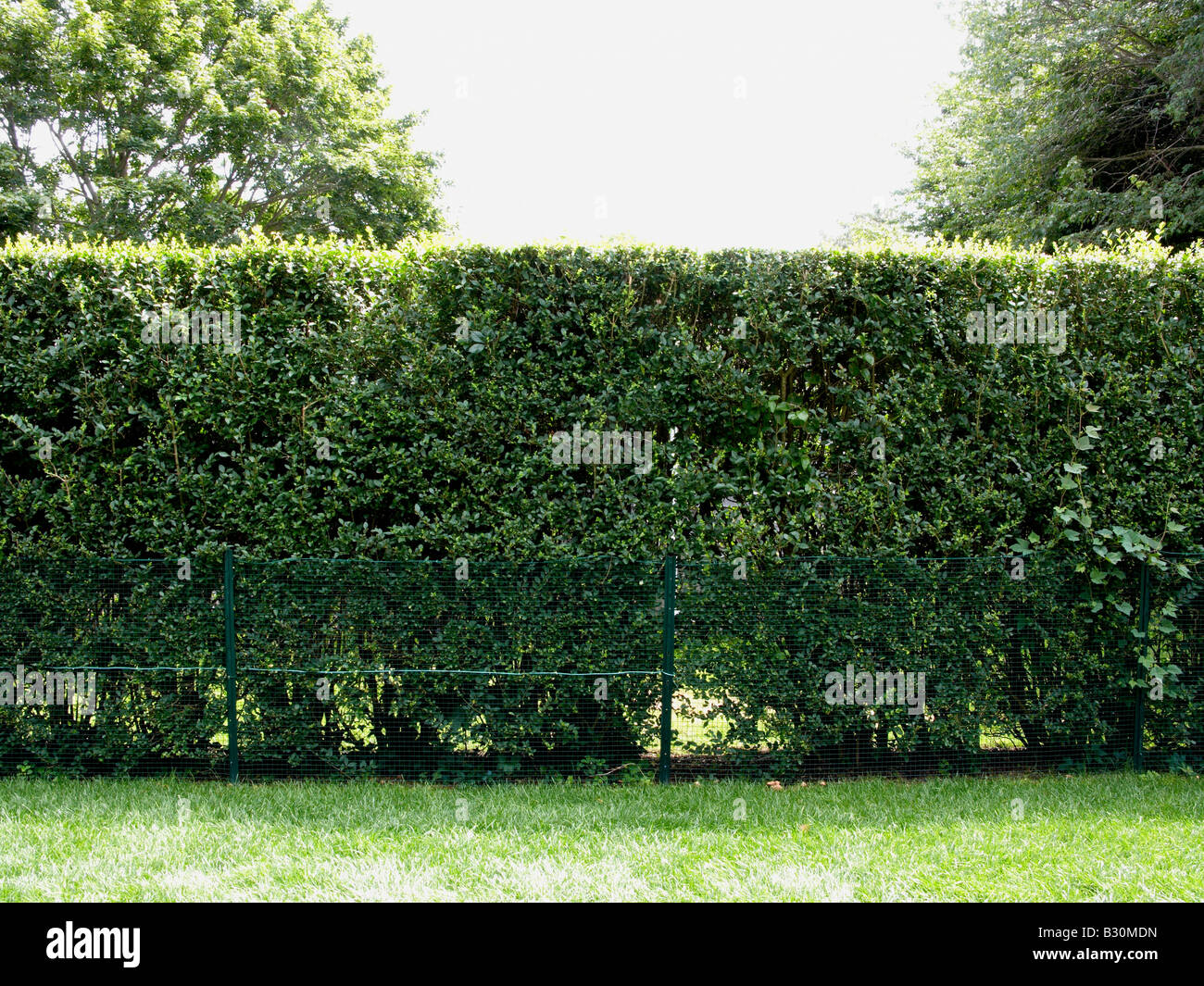 hedgerow - Stock Image