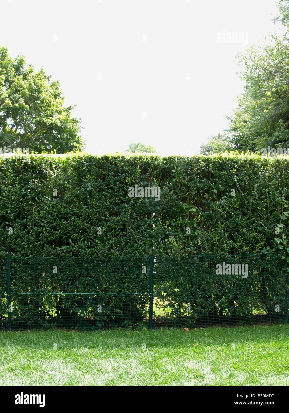 hedgerow - Stock Image