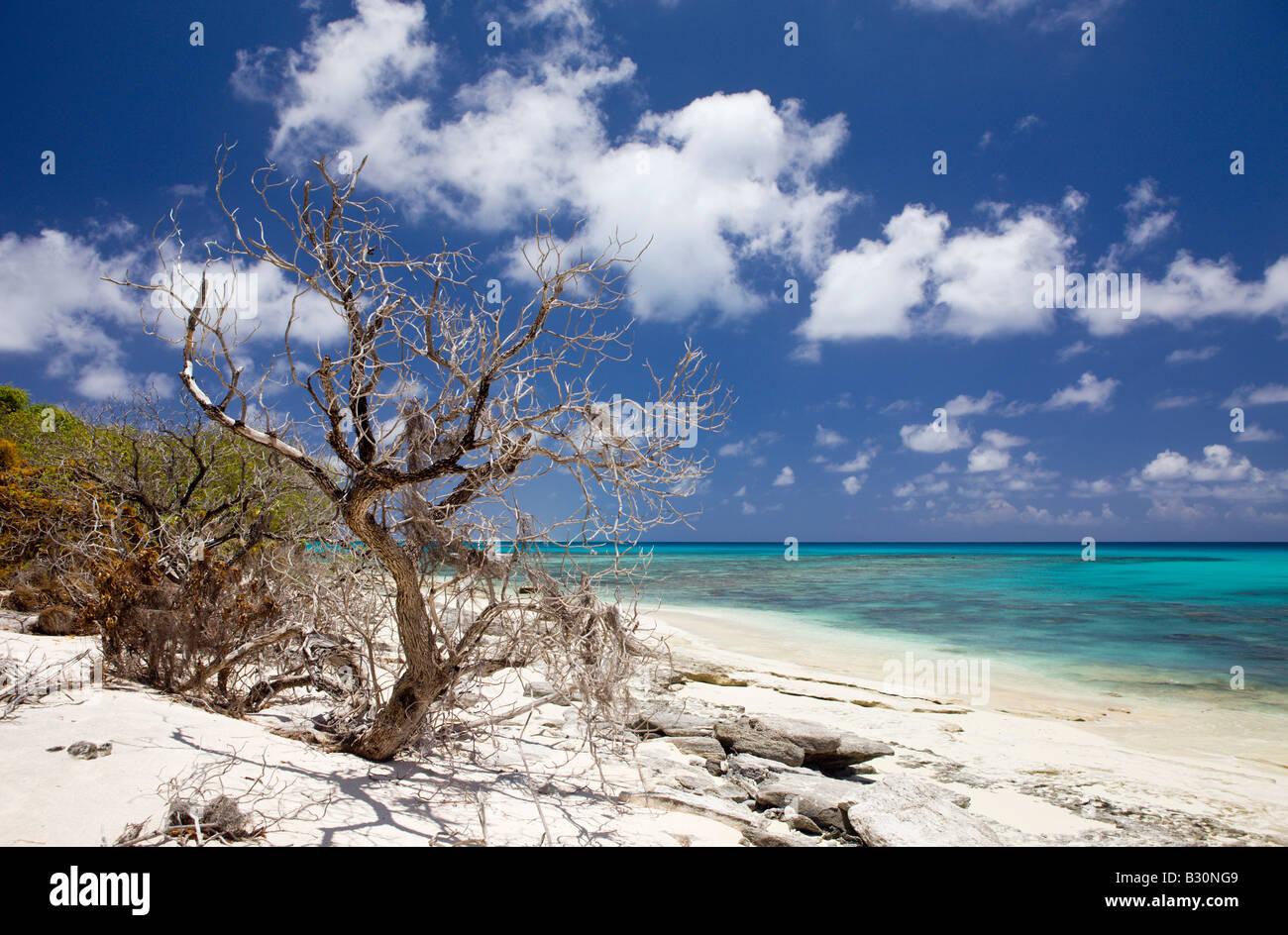 With Atoll of bikini still