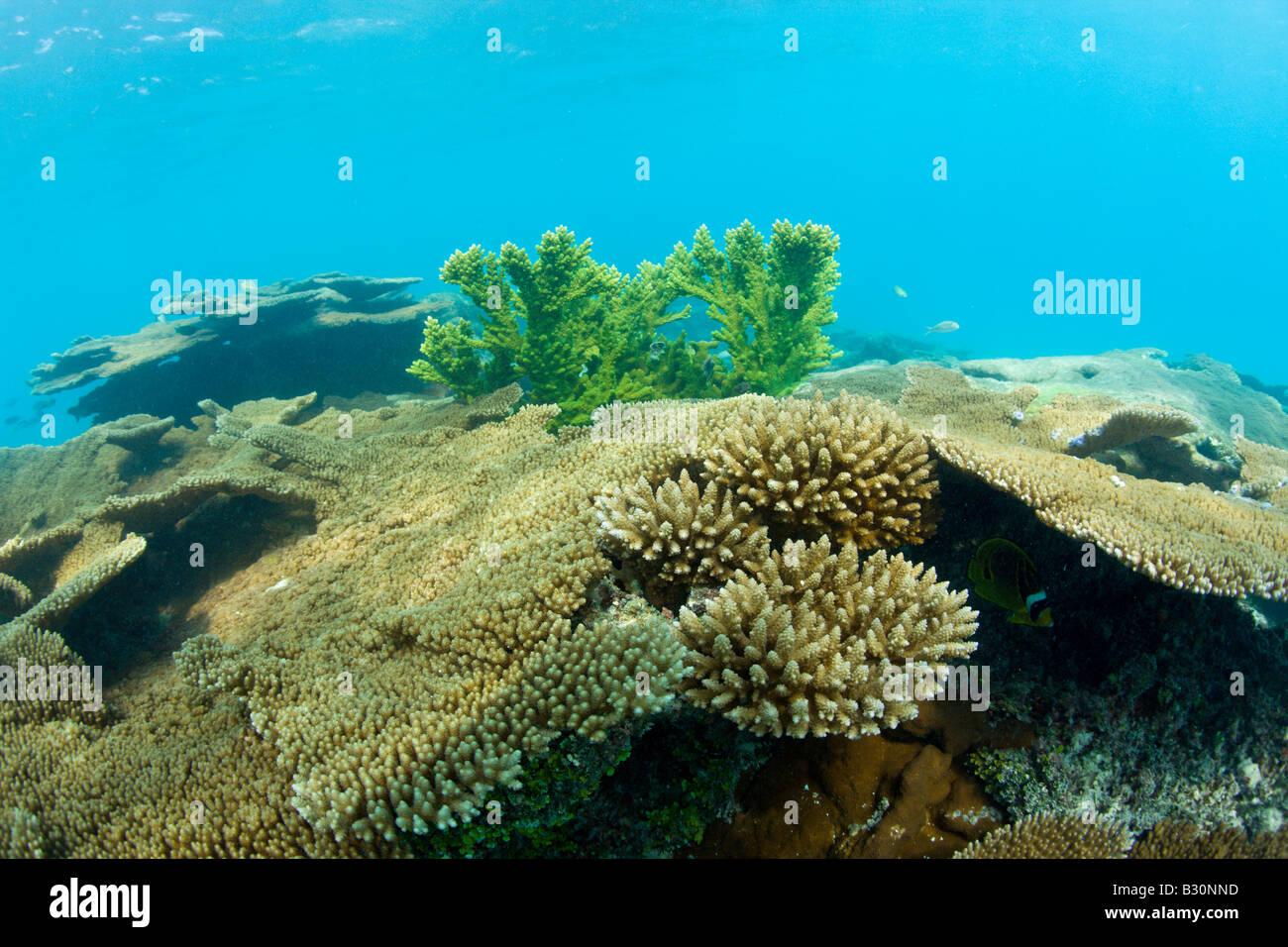Corals in Bikini Lagoon Marshall Islands Bikini Atoll Micronesia Pacific Ocean - Stock Image