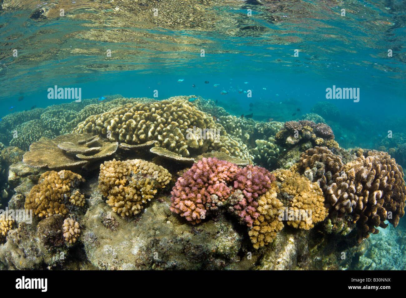 Pristine Corals in Bikini Lagoon Marshall Islands Bikini Atoll Micronesia Pacific Ocean - Stock Image