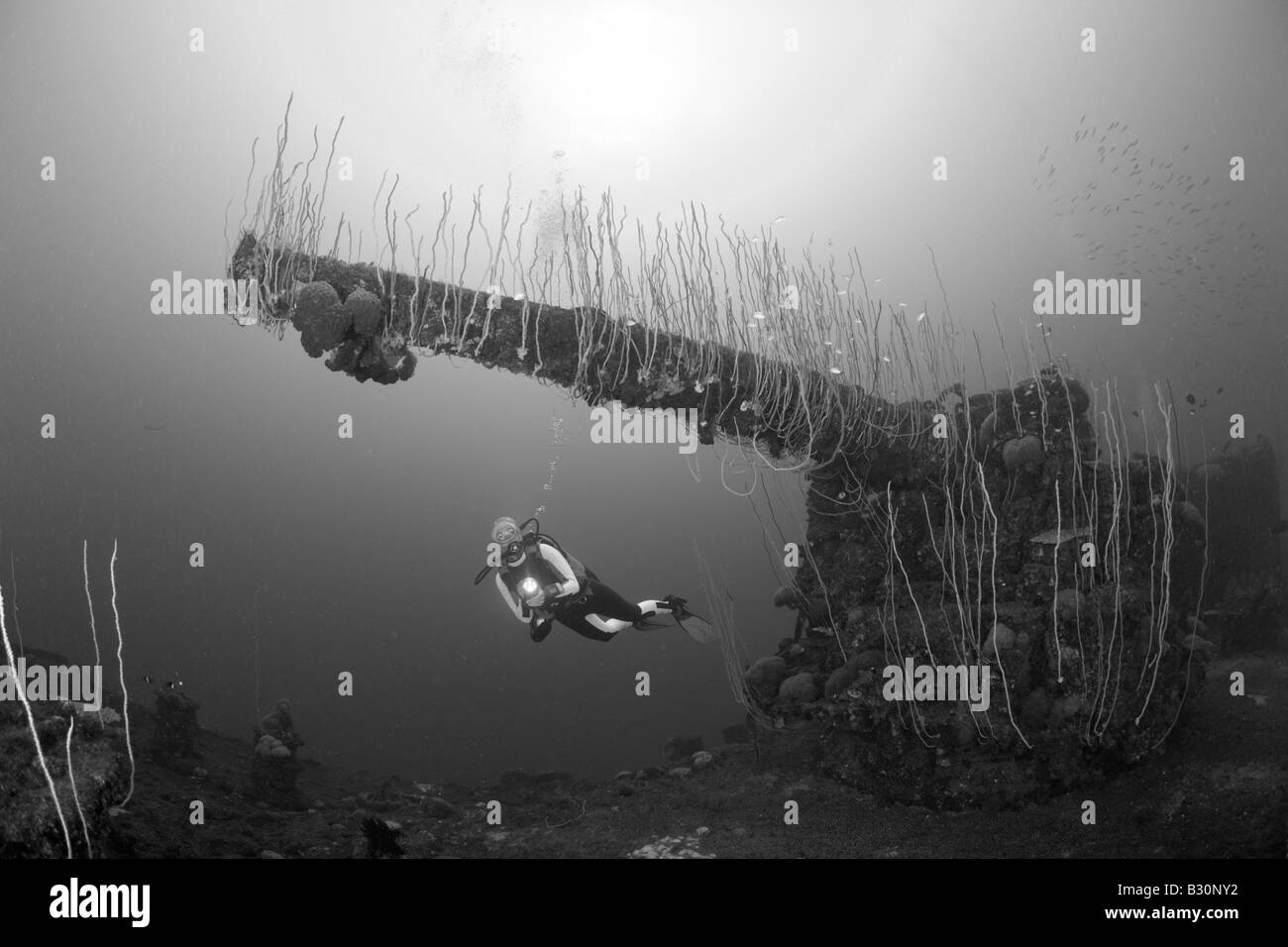 Diver and 5 inch Gun of USS Carlisle Attack Transporter Marshall Islands Bikini Atoll Micronesia Pacific Ocean - Stock Image