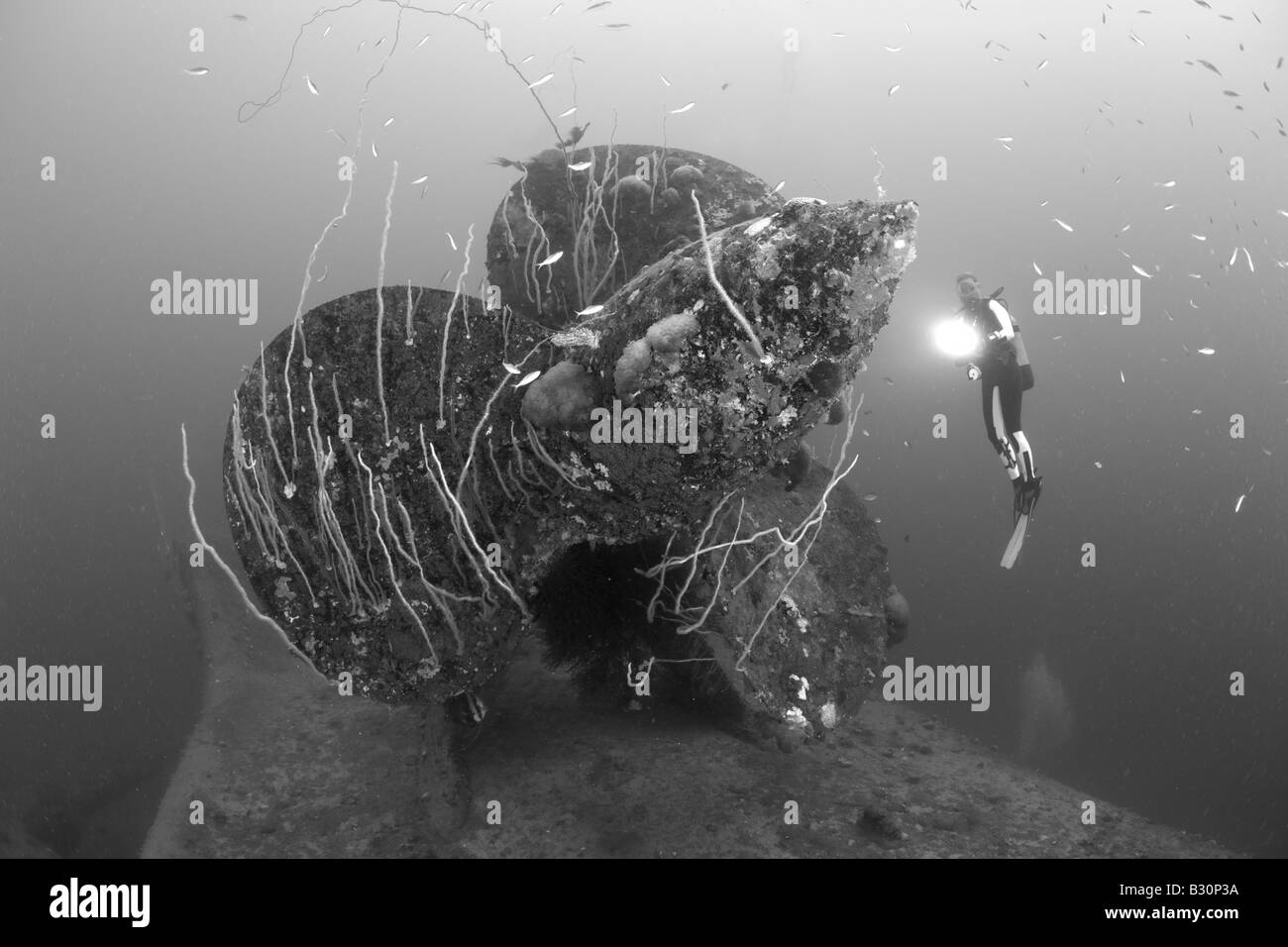 Diver at Propellers of HIJMS Nagato Battleship Marshall Islands Bikini Atoll Micronesia Pacific Ocean - Stock Image