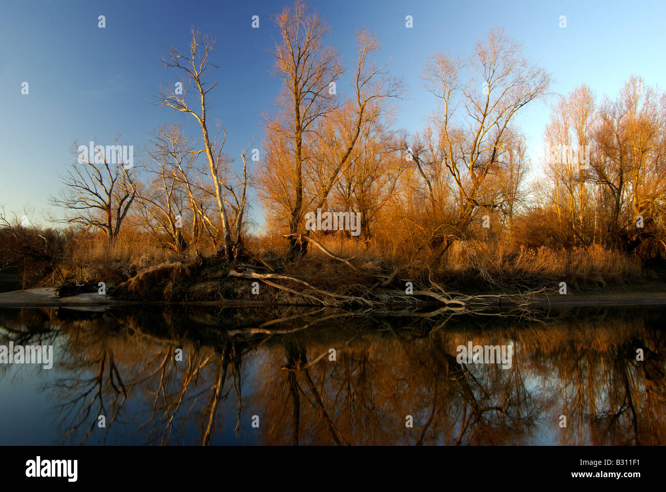 island on the Old Rhine near Ketsch Germany in wnter at sunset with trees reflected in the calm water - Stock Image