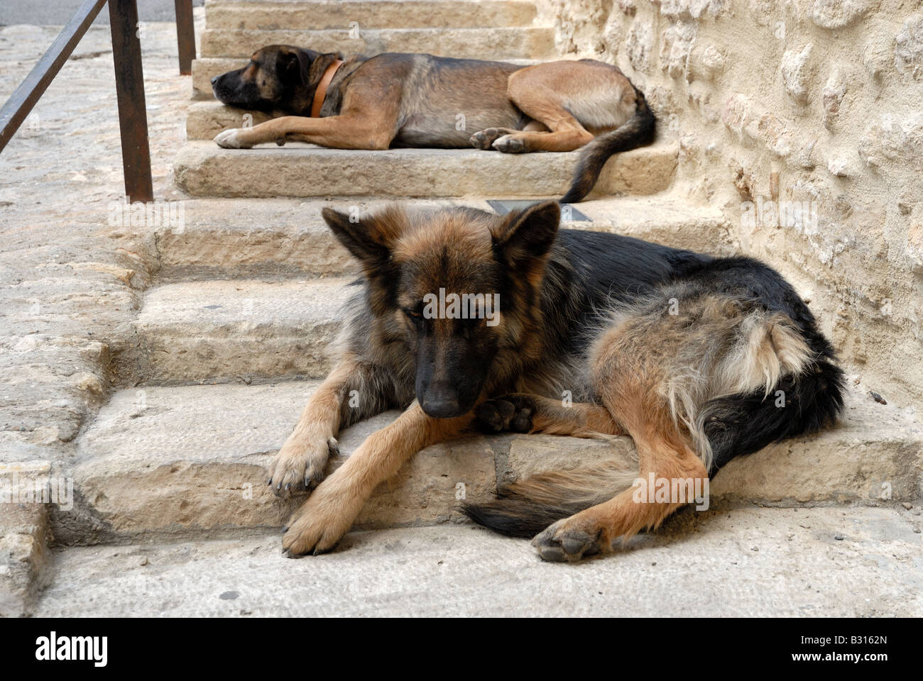 Two dogs laze around in Gordes, southern France - Stock Image