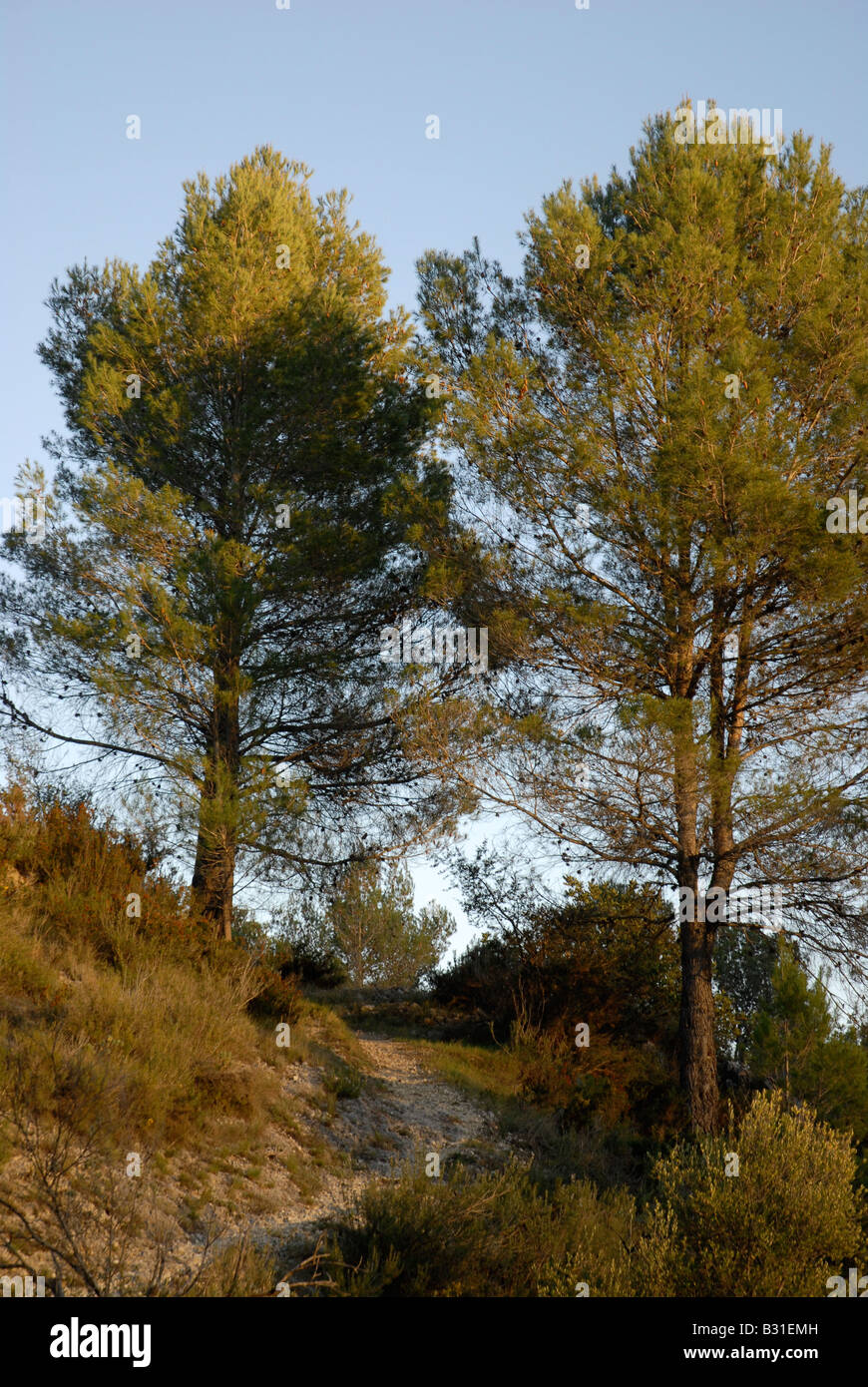 path down to Els Tolls, near Vall de Ebo village, Marina Alta, Alicante Prov. Comunidad Valenciana, Spain - Stock Image
