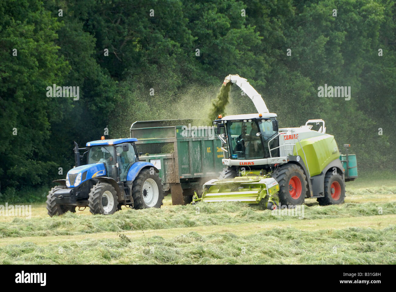 Silage cutting and forage harvesting pastureland for winter cattle feed on Parkhurst Farm in West Sussex - Stock Image