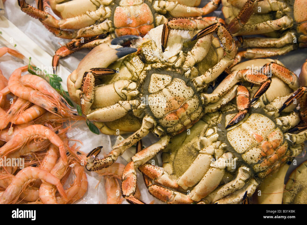 Crabs for sale on supermarket fish counter - Stock Image