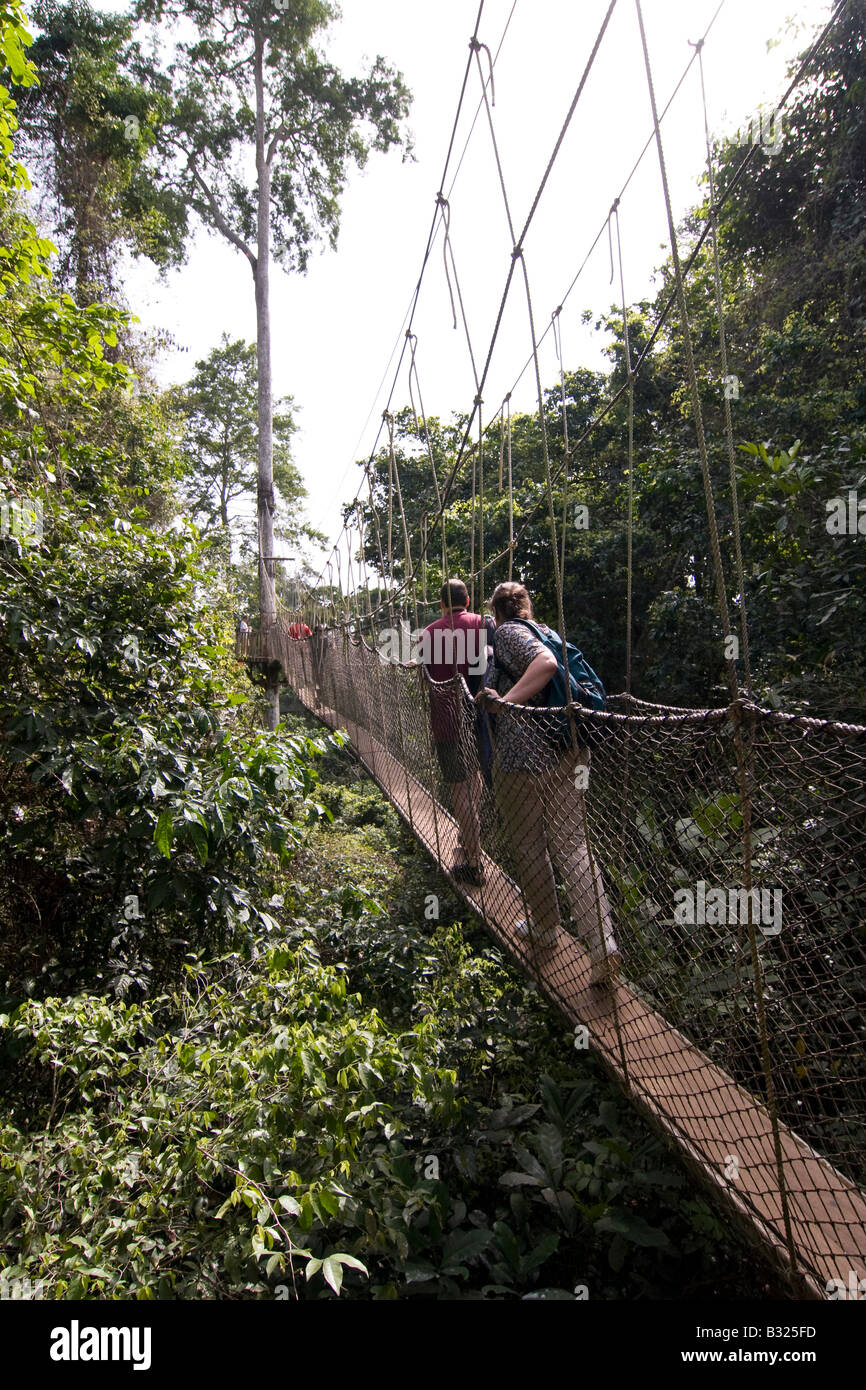 People on the 40 metre high canopy walk at Kakum National Park Ghana Stock Photo