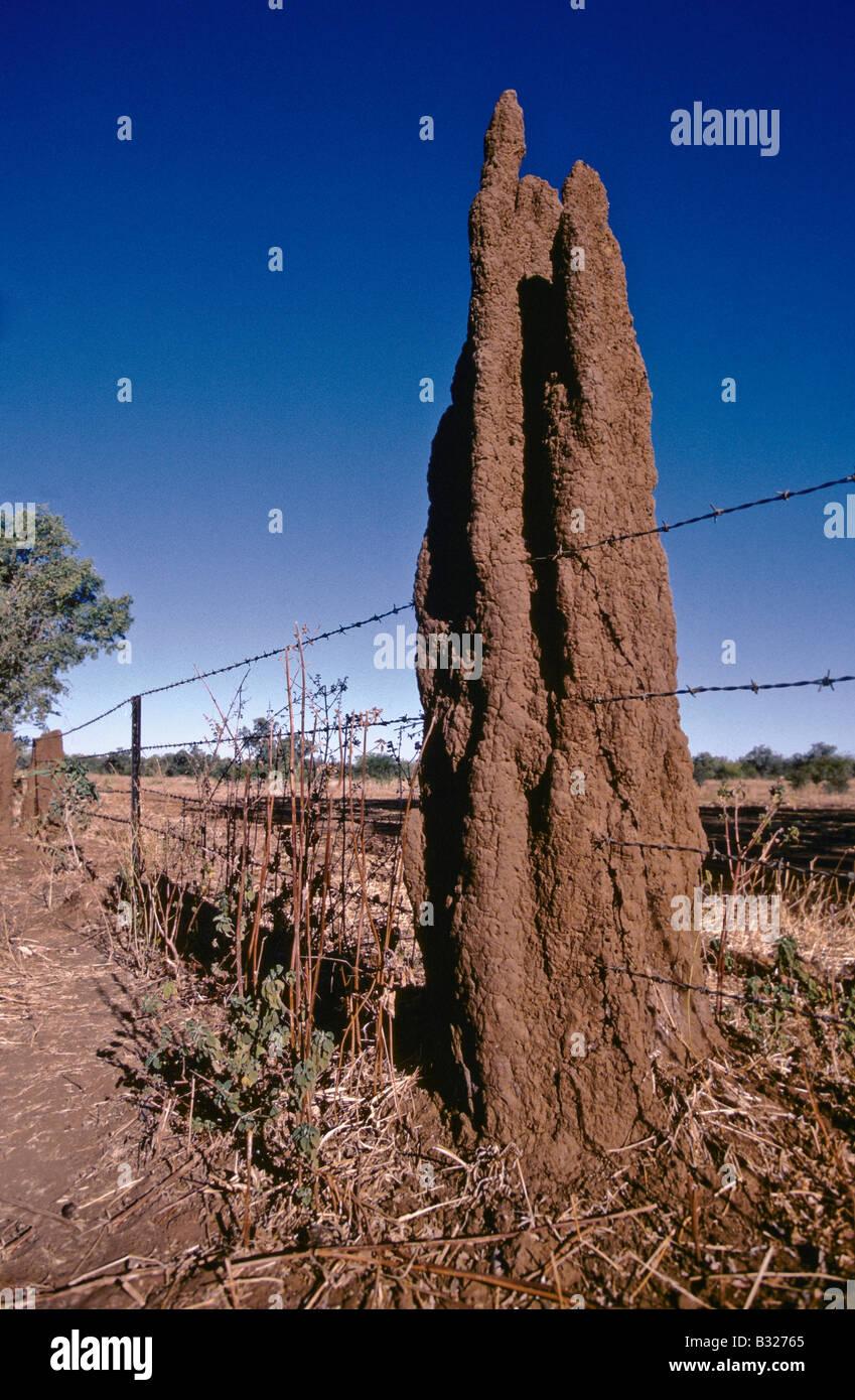 Termite mound, Australia - Stock Image