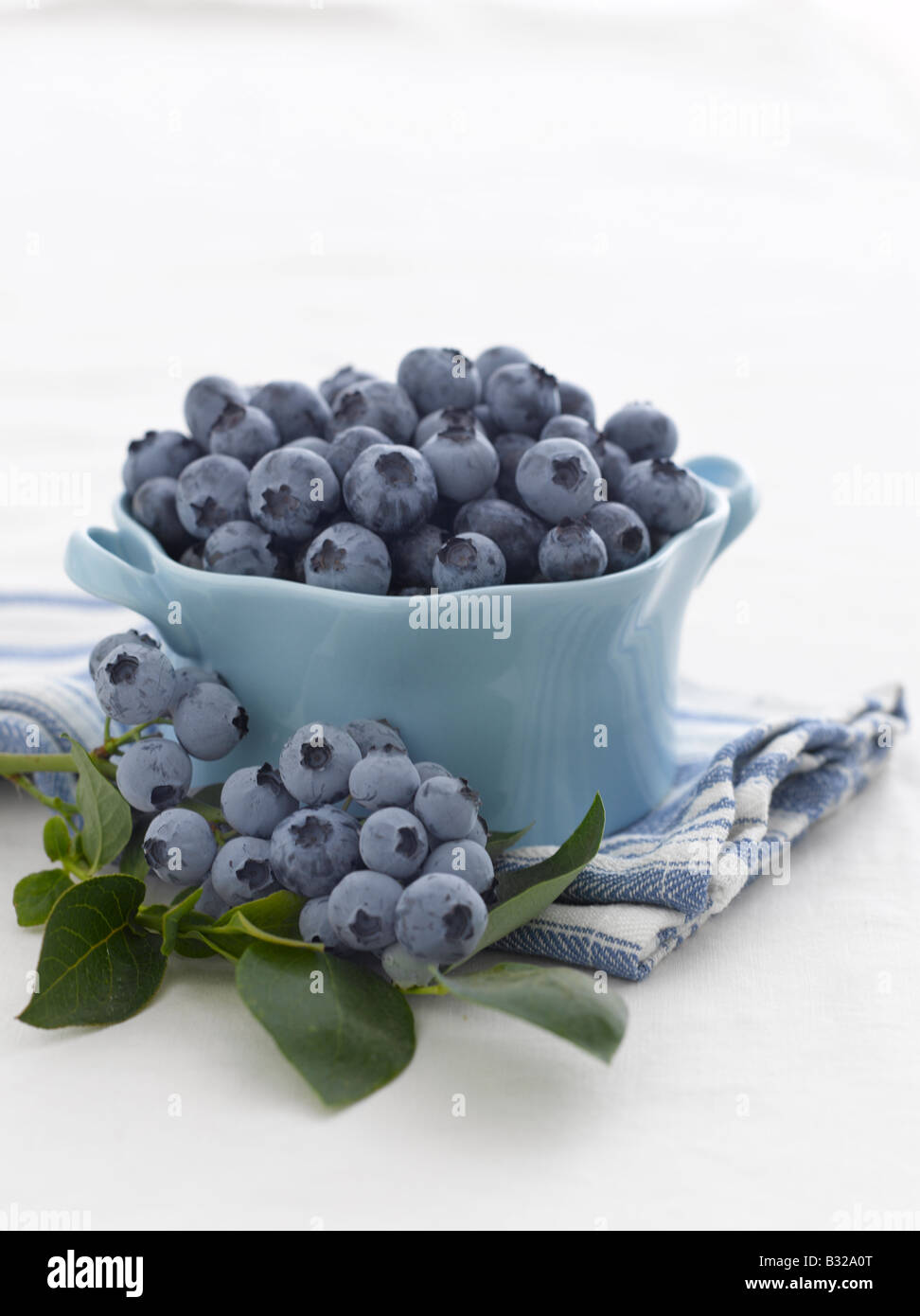 Fresh blueberries and blueberry stem - Stock Image
