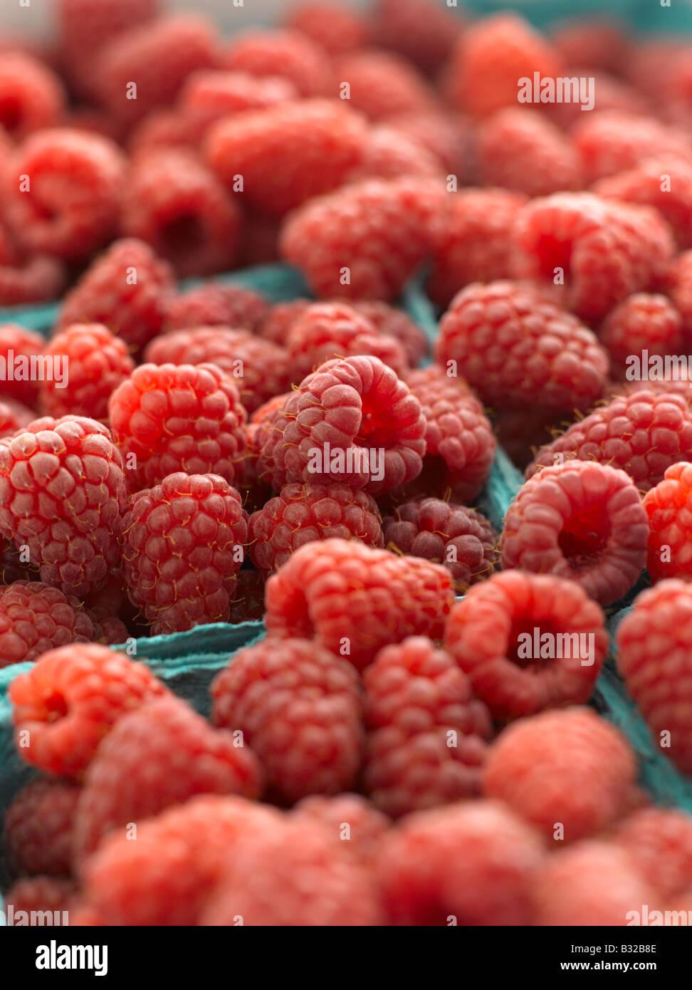 Fresh red raspberries in baskets - Stock Image