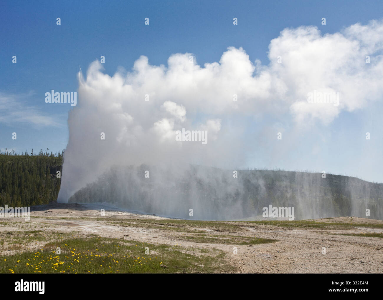 OLD FAITHFUL GEYSER erupts hourly sending 8 400 gallons of boiling water 184 feet into the air YELLOWSTONE NATIONAL - Stock Image