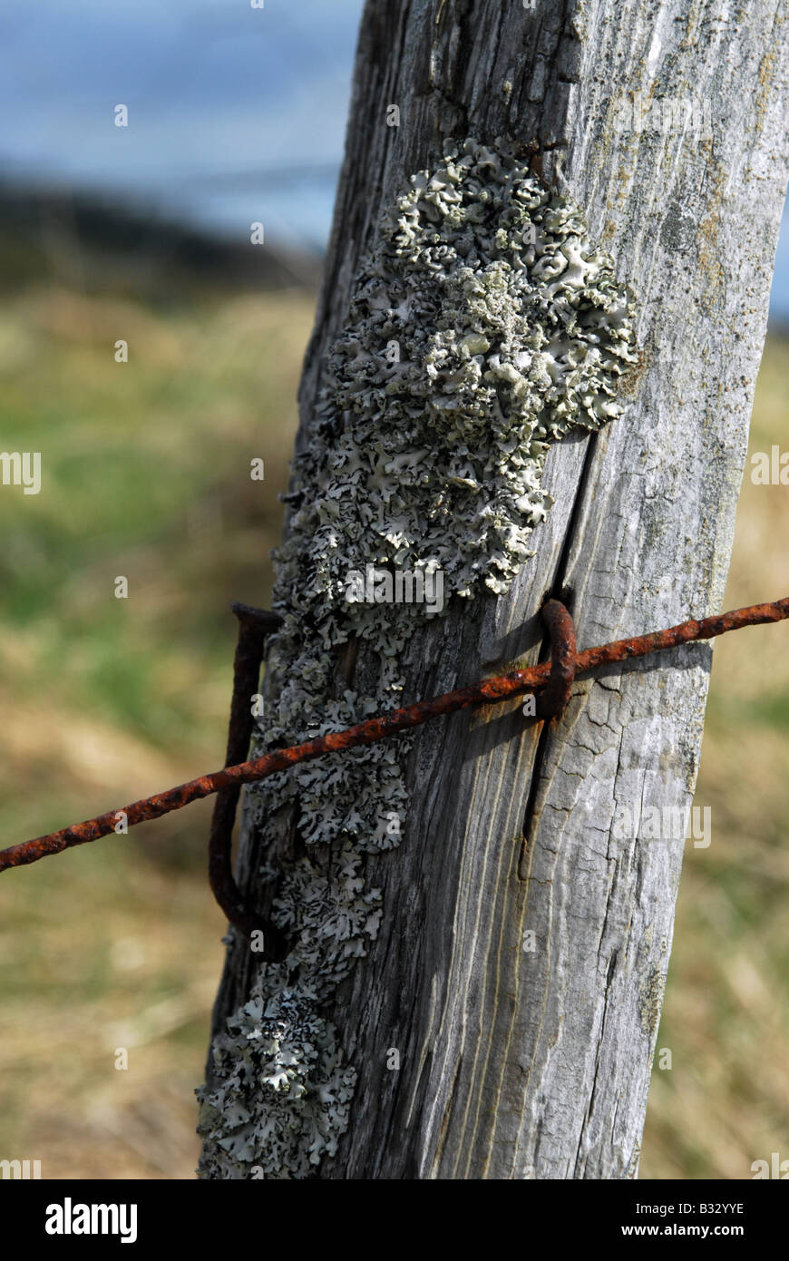 Old Fence Post Barbed Wire Stock Photos & Old Fence Post Barbed Wire ...