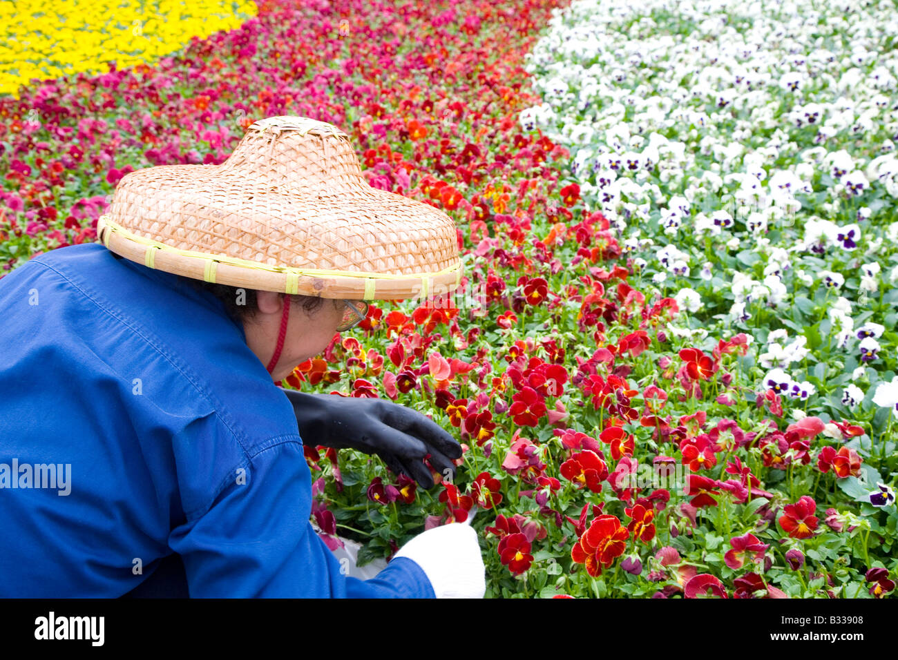 Chinese woman plants flowers wearing traditional woven hat Stock Photo