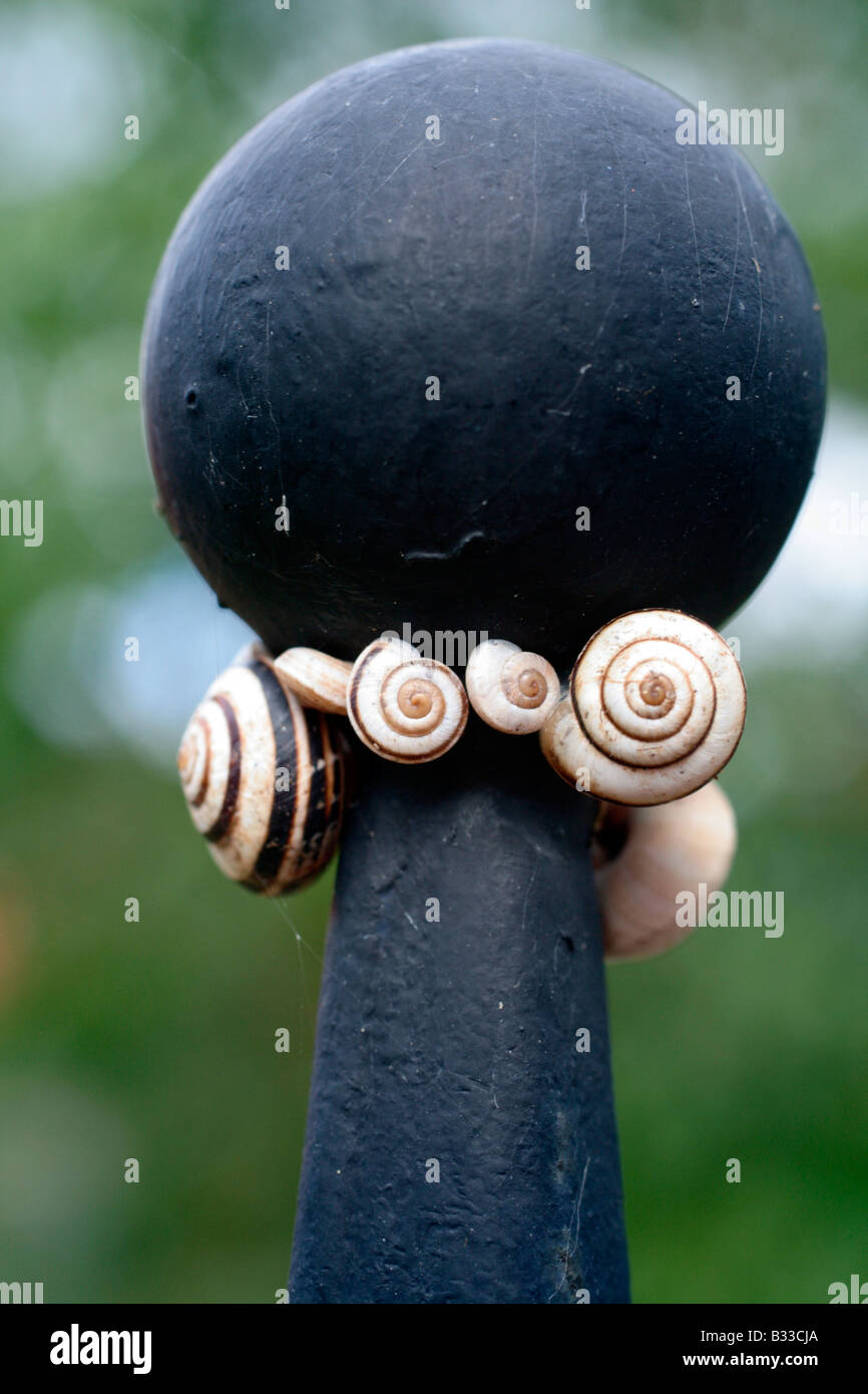 SNAILS ON A WROUGHT IRON GATEPOST - Stock Image