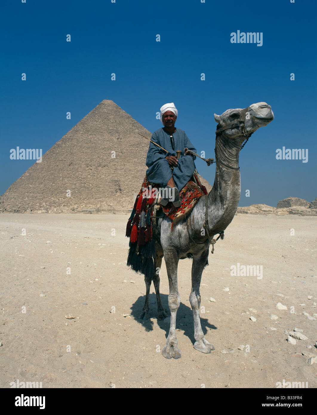 Camel with owner at Pyramids, Giza, Egypt - Stock Image