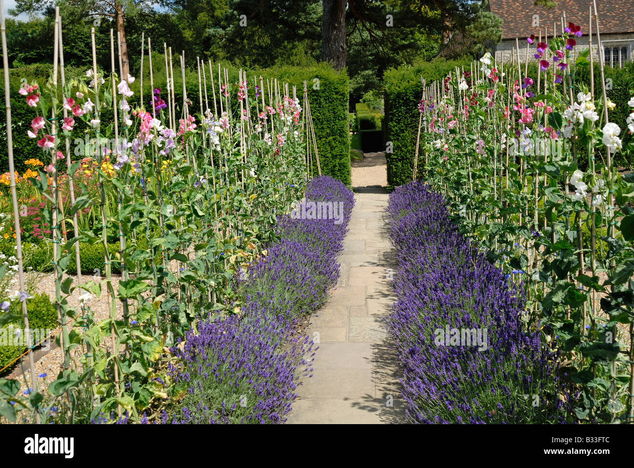 Traditional English country garden - Stock Image