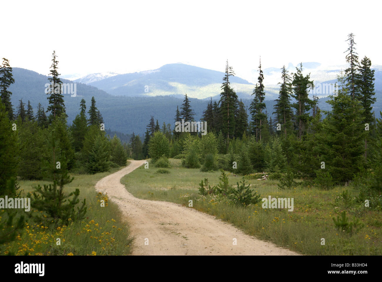 Winding dirt road leading nowhere amidst backdrop of mountains surrounded by meadows and evergreen trees - Stock Image