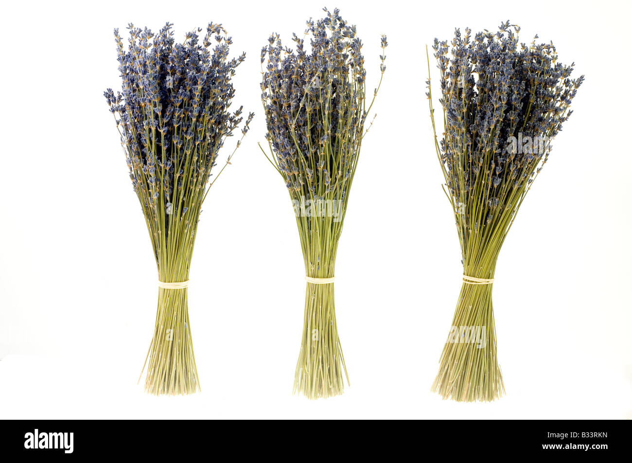 Three bunches of dried lavender stems Stock Photo: 19138777