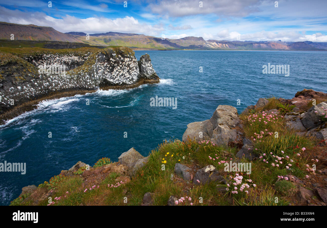 A view from the cliffs at Arnarstapi on the Snaefellsness Peninsula, Iceland - Stock Image