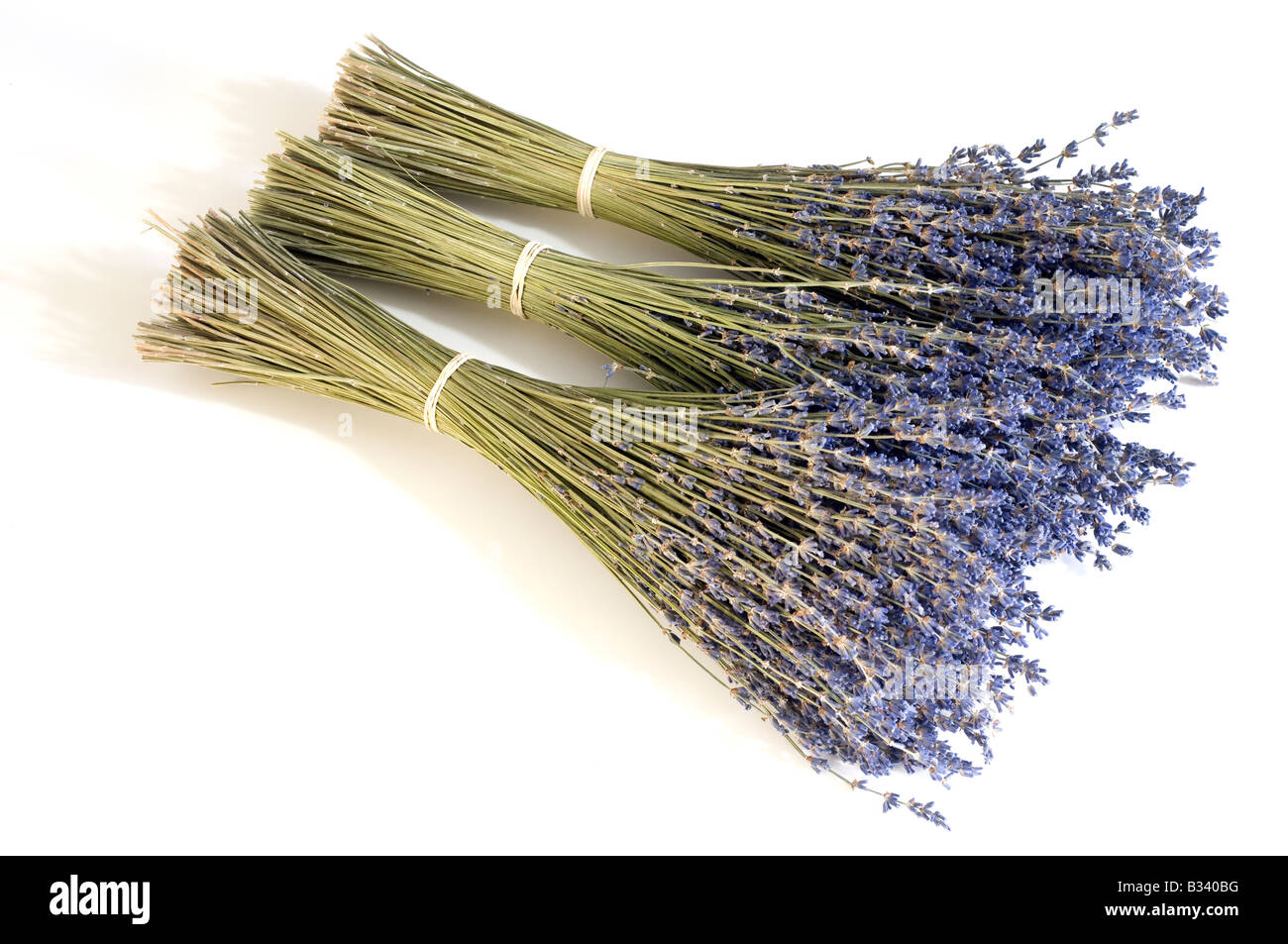 Three bunches of dried lavender stems - Stock Image