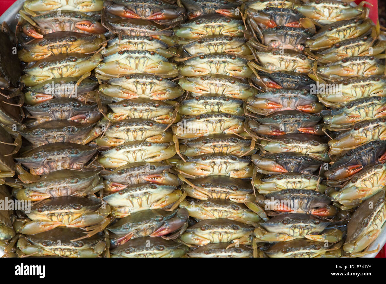Live crabs tied up at a Vietnamese market - Stock Image