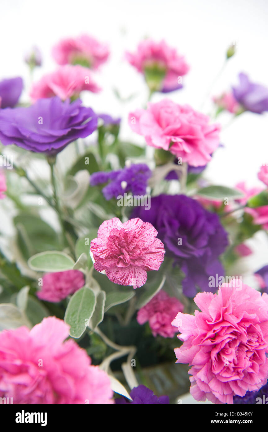Bunch Of Pink And Purple Carnation Flowers Stock Photo 19146623 Alamy