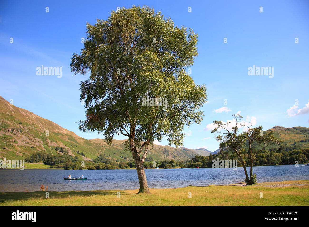 Silver Birch Tree on the shores of a Lake with two people canoing in the distance on a summers day. - Stock Image