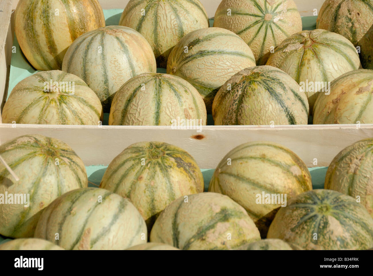 Stock photo of trays of Melons for sale at a farmers marker in France - Stock Image