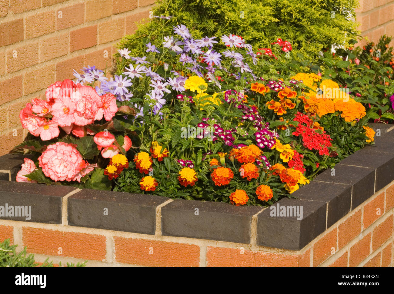 A raised flower bed in a garden - Stock Image