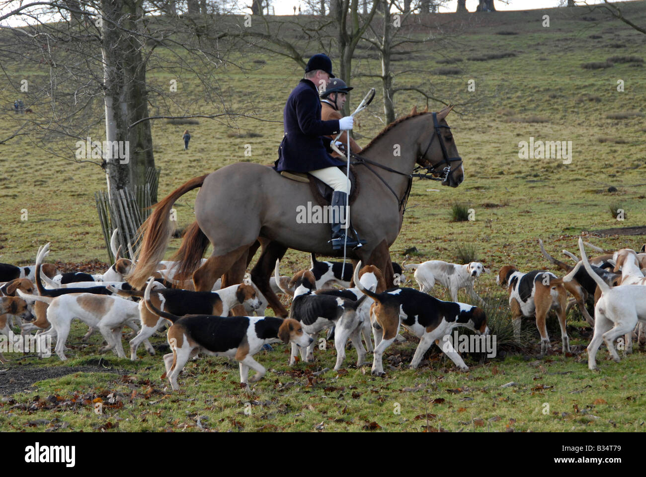 Huntsmen and hounds - Boxing Day Hunt, Petworth, Surrey, England - Stock Image