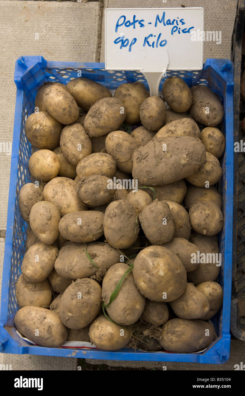plastic box of fresh unwashed muddy local maris piper potatoes on sale for 90p per kilo at farmers market - Stock Image