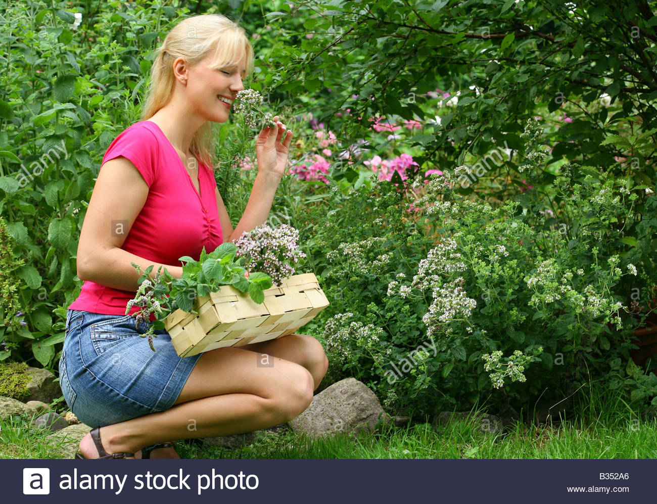 young woman with basket full of herbs and lavender kneeling in the garden Stock Photo